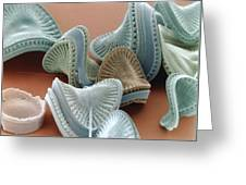 Diatom Algae, Campylodiscus Greeting Card by Power And Syred