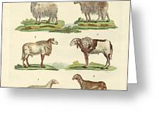 Different Kinds Of Sheep Greeting Card