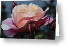 Distant Drum Rose Bloom Greeting Card