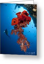 Diver Looks On At A Bright Red Soft Greeting Card by Steve Jones