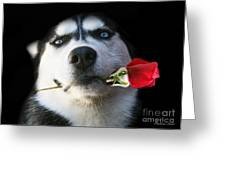 Do You Tango Greeting Card