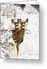 Doe Mule Deer In Snow Greeting Card