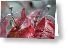 Dogwood  Autumn Greeting Card