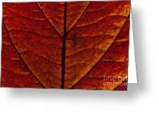 Dogwood Leaf Backlit Greeting Card
