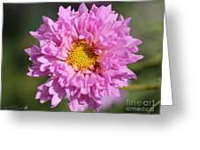 Double Click Cosmos Named Rose Bonbon Greeting Card