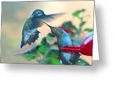 Double Hummer Greeting Card