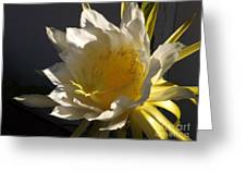 Dragon Fruit Blossom In Profile Greeting Card