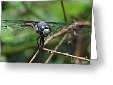 Dragonfly 71 Greeting Card