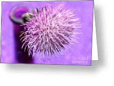 Dream In Violet Greeting Card