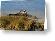 Driftwood In Beach Grass Greeting Card