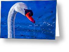Dripping Beauty Greeting Card