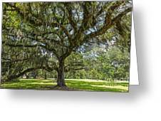 Dripping With Spanish Moss Greeting Card
