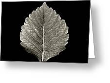 Dry Leaf 1 Greeting Card