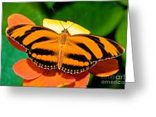 Dryadula Butterfly Greeting Card