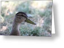 Duck - Animal - 01134 Greeting Card