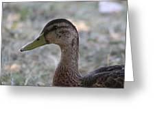 Duck - Animal - 01137 Greeting Card