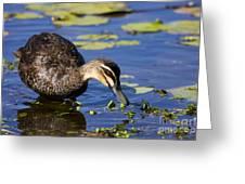Duck Hunt Greeting Card