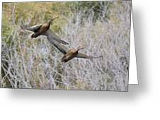 Duck Season? Greeting Card