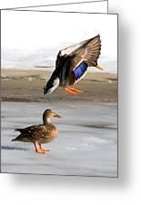 Ducking Around Greeting Card