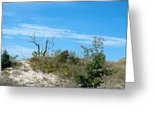 Dune Tree Greeting Card
