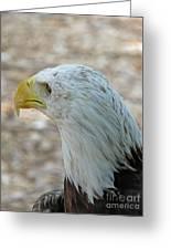 Eagle 3  Greeting Card