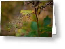 Early Fall Greeting Card