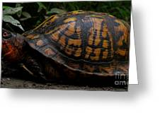 Eastern Box Turtle Greeting Card