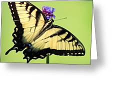 Eastern Tiger Swallowtail Butterfly Square Greeting Card