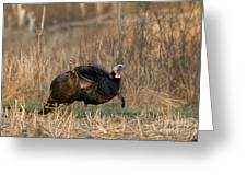 Eastern Wild Turkeys Greeting Card by Linda Freshwaters Arndt