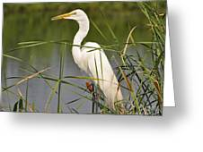 Egret In The Cattails Greeting Card