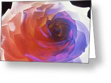 Electric Rose  Greeting Card by Etti PALITZ