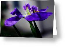Elegant Iris Greeting Card