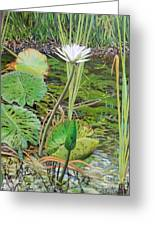 Emerald Lily Pond Greeting Card