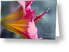 Enchanting Florals Greeting Card