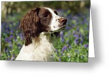 English Springer Spaniel Dog Greeting Card