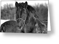 Equine Majesty Greeting Card