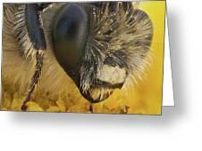 Eucera Longicornis Portrait 4.5x Greeting Card