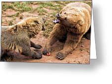 Eurasian Brown Bears Fighting Greeting Card