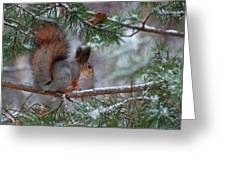 Eurasian Red Squirrel Greeting Card