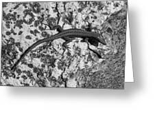European Wall Lizard In Desenzano. Lago Di Garda Greeting Card