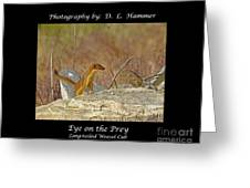 Eye On The Prey Greeting Card