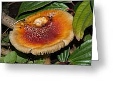 Fairy Mushrooms Greeting Card