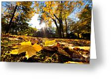 Fall Autumn Park. Falling Leaves Greeting Card
