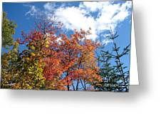 Fall Colors And Blue Sky Greeting Card