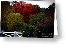 Fall Colours In Massachusetts Greeting Card