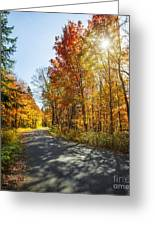 Fall Forest Road Greeting Card