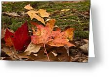 Fall Moss Carpet Greeting Card