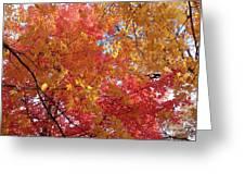 Fall Saint Louis 1 Greeting Card