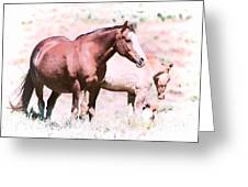 Family Of Horses Greeting Card