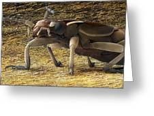 Female Adult Earwig, Sem Greeting Card by Power And Syred